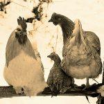 """Knjiga """"Svaka ptica svojim glasom peva"""""""